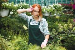 围裙和桃红色手套的年轻疲乏的卖花人周道地与植物一起使用自温室 库存图片