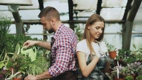 围裙的年轻快乐的妇女和手套自温室松开在花和聊天他的男朋友的地面 免版税库存图片