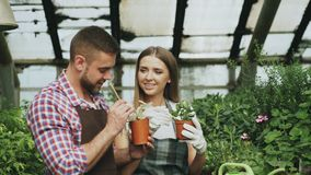 围裙的年轻快乐的妇女和手套自温室松开在花和聊天他的男朋友的地面 图库摄影