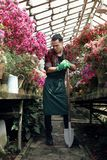 围裙的英俊的男性花匠和与一把大铁锹的绿色手套,摆在和看在温室 免版税库存图片