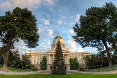 国会大厦圣诞树 免版税库存图片