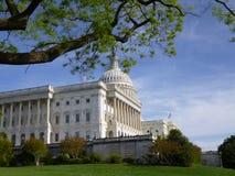 国会大厦在夏天,与杉树的侧视图 免版税库存图片