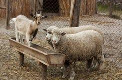 国内的动物 免版税图库摄影