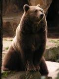 国内的熊 免版税库存图片