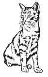 国内的猫 库存照片