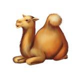 国内骆驼休息,放置在地面上 库存照片