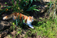 国内cat.1 库存照片
