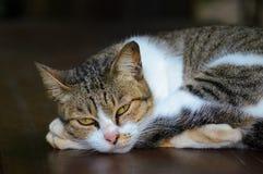 国内cat.1 免版税库存照片