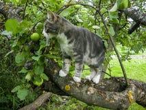 国内cat.1 图库摄影