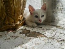 国内cat.1 免版税库存图片
