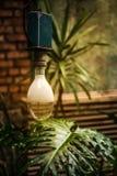 国外植物的光 库存图片
