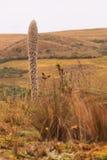 国家公园厄瓜多尔 免版税库存图片