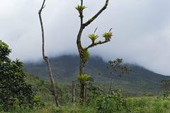 国家公园和火山雾的阿雷纳尔,哥斯达黎加 库存照片