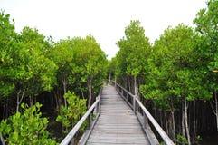 国家公园在泰国 库存图片