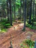 国家公园在芬兰叫nuuksio 免版税图库摄影