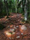 国家公园在芬兰叫nuuksio 免版税库存照片