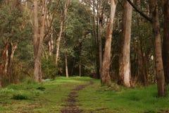 国家公园当地走的轨道 图库摄影