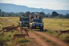 国家公园照片徒步旅行队坦桑尼亚 米库米国家公园,坦桑尼亚 免版税库存照片