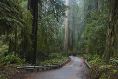 国家公园红木红木 库存图片