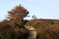 国家公园结构树 库存图片