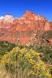 国家公园美国zion 图库摄影