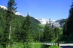 国家公园赖尼尔 库存图片