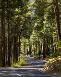 国家公园路绕优胜美地 库存图片