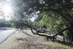 国家公园路 库存图片