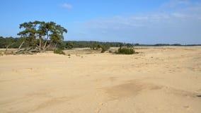 国家公园De Hoge Veluwe 免版税图库摄影