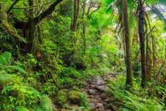 国家公园El Yunque 免版税图库摄影