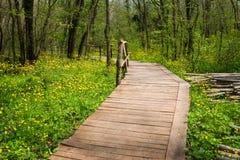 国家公园Ropotamo保加利亚 木桥导致Ropotamo河流桥渡绿色春天森林 库存照片