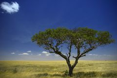 国家公园serengeti 免版税图库摄影