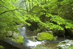国家公园smokey田纳西 免版税库存图片