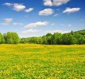 国家公园Sumava -捷克共和国 库存照片