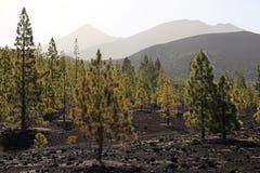 国家公园teide tenerife 图库摄影