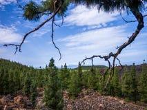 国家公园teide tenerife 库存图片