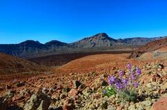 国家公园teide tenerife 免版税图库摄影
