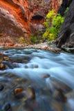 国家公园zion 库存图片