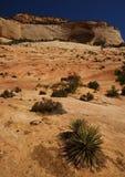 国家公园zion 图库摄影