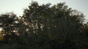 国家土路在日落的Lomellina 影视素材