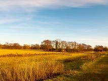 国家天风景领域树放牧秋天冬天 库存图片