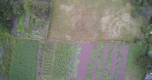 国家庭院的空中寄生虫视图用土豆、樱桃和圆白菜 影视素材
