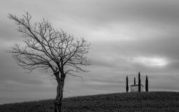 国家教堂和孤立树 免版税图库摄影