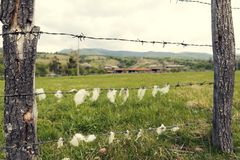 国家木篱芭的农村动物农场有与绵羊羊毛的铁丝网的 库存图片