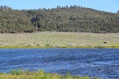 国家森林 免版税库存照片