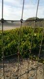 国家海滩在圣克鲁斯 免版税库存图片
