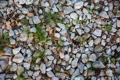 国家石渣与草,木针,锥体的路纹理, fal 免版税库存图片