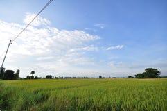 国家边的玉米田 库存照片