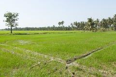 国家边的绿色米农场 库存图片