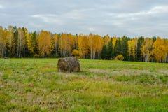 国家领域的干草堆 免版税图库摄影